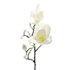 Magnolia Vit, 60 cm.