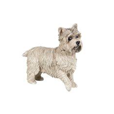 Hund West terrier 31x23