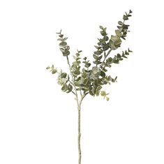 Eukalyptus green 24