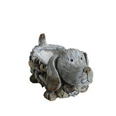 Hundkruka sten 40x20