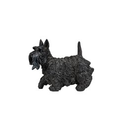 Hund skotsk terrier poly
