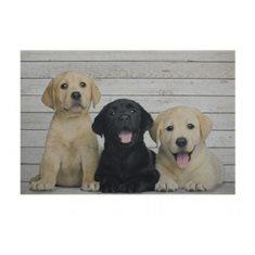 Köksmatta Puppies 3 Labrador