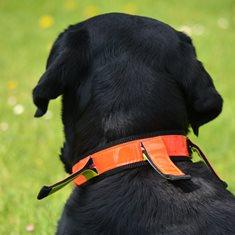 Hundhalsband reflex Hunter