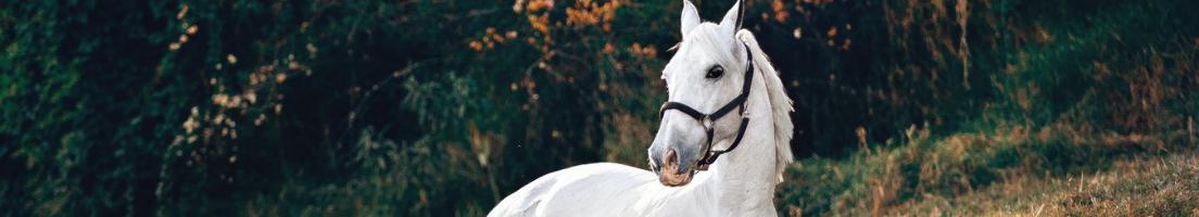 innetäcke häst rea