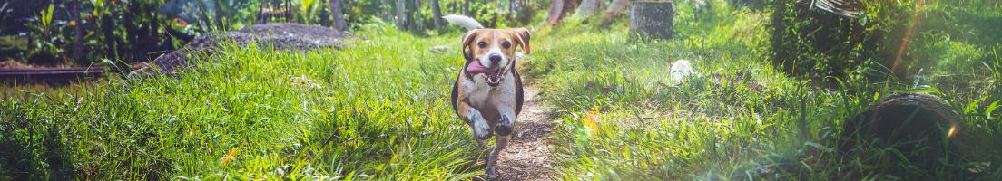 Hund: Vård & Skötsel