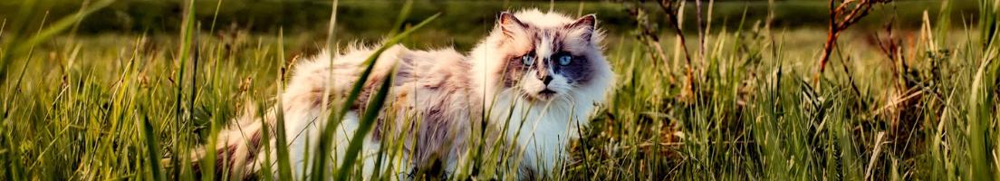 Katt: Halsband, selar, koppel