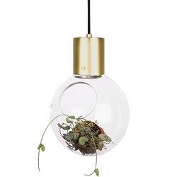 Globen Mini Hole Pendel/Bordslampa Klar/Borstad Mässing