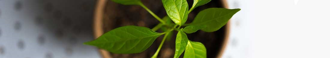 Plantelamper