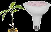 Växtlampor