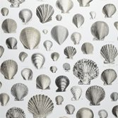 Designers Guild Captain Thomas Browns Shells - Pearl