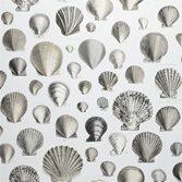 John Derian Captain Thomas Browns Shells - Pearl