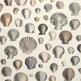 Designers Guild Captain Thomas Browns Shells - Oyster