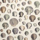 John Derian Captain Thomas Browns Shells - Oyster