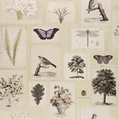 John Derian Flora and Fauna - Canvas