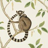 Sanderson Ringtailed Lemur tapet