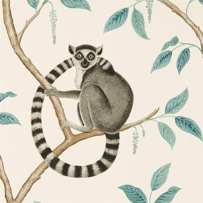 Sanderson Ringtailed Lemur