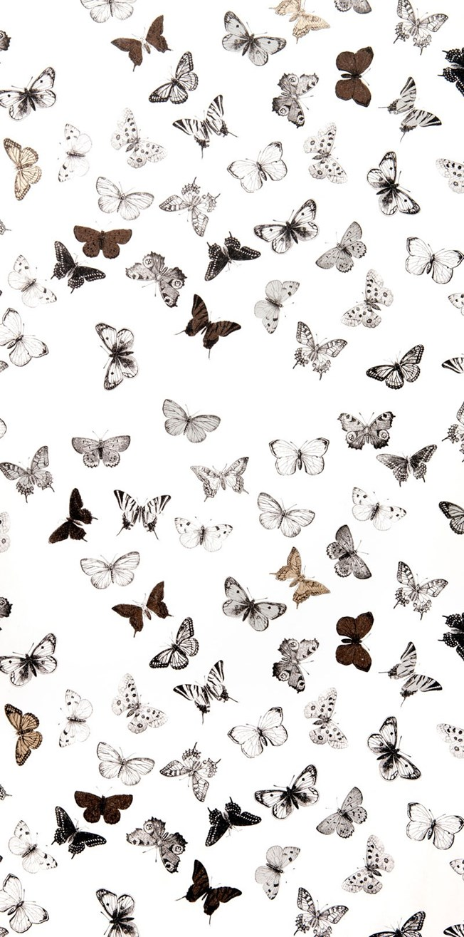 Mimou Butterfly