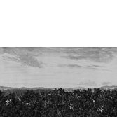 Sandberg Wallpaper Oak View Graphite