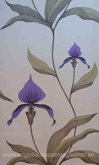 Cole & Son Orchide