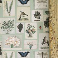 John Derian Flora And Fauna