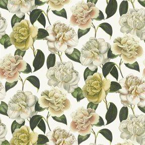 John Derian Camellia Folly Parchment