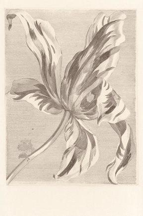 Intrade Tulip Teyler sepia Tapet
