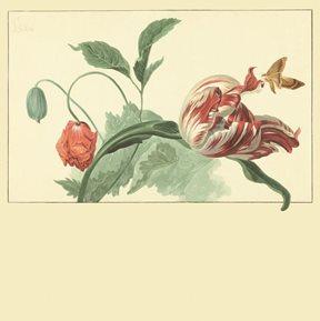 Intrade Tulip and Poppy cream