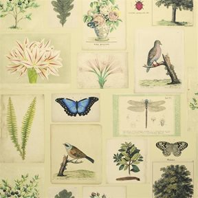 John Derian Flora And Fauna Tapet