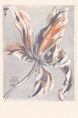 Intrade Tulip Teyler marine