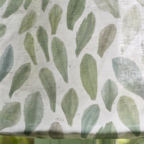 John Derian Leaf Specimens Thyme