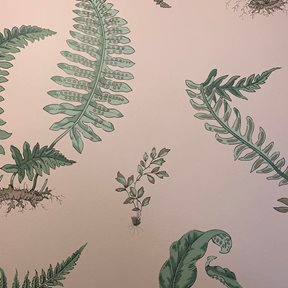 Baker Ferns, Blush