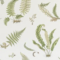 Baker Ferns, Leaf