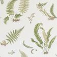 Baker Ferns, Leaf