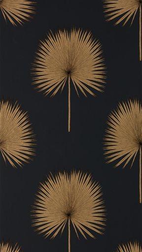 Sanderson Fan Palm