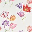 Sanderson Tulipomania