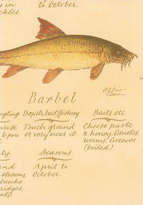 Lewis & Wood European Fish Tapet