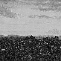 Sandberg Oak View Tapet