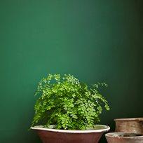 Little Greene Dark Brunswick Green 88 Färg