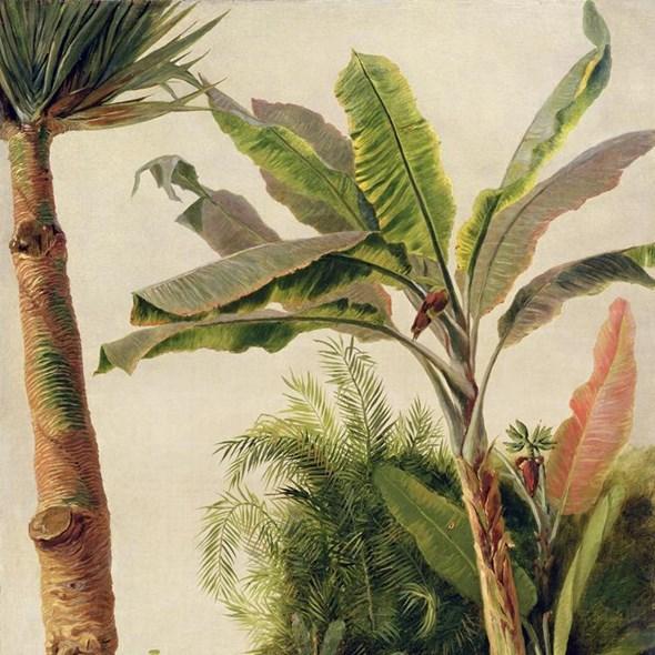 Au fil des Couleurs Banana tree Tapet