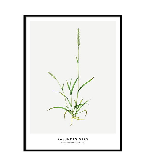Poster Råsunda Gräs