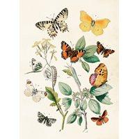 Poster Butterflies vintage, 50x70 cm