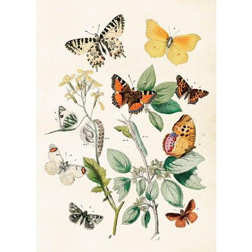 Plansch Fjärilar Vintage, 50x70 cm