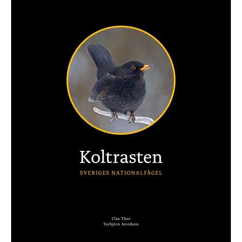 Koltrasten - Sveriges nationalfågel