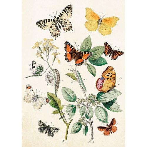 Kort Fjärilar Vintage