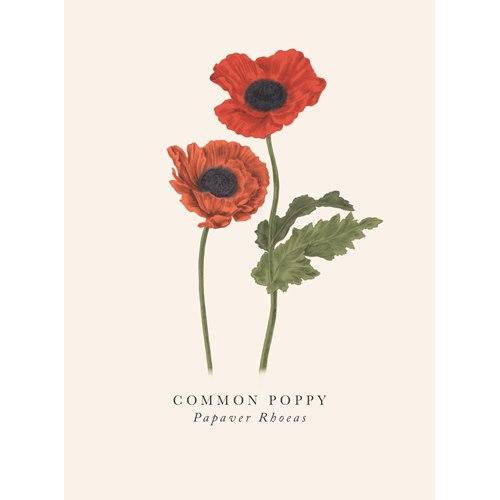 Kort Poppy