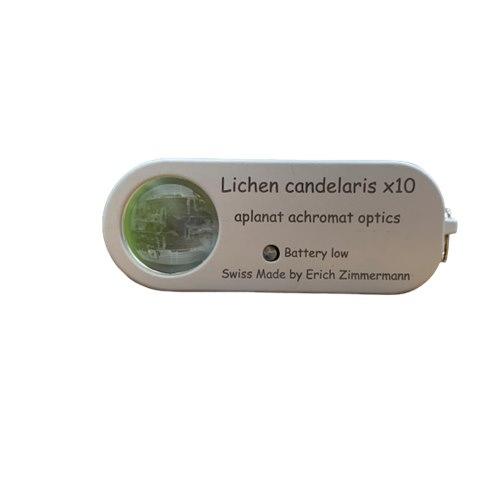 Lichen candelaris 10x