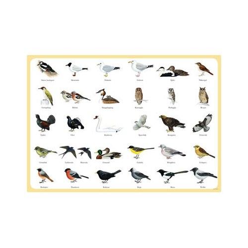 Bordstablett Svenska fåglar