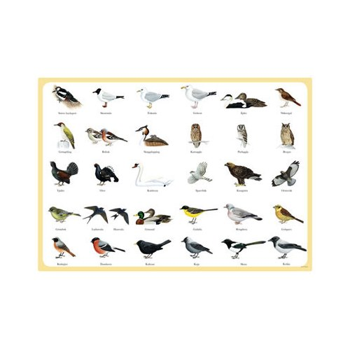 Placemat Swedish Birds