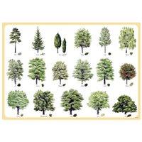 Bordstablett Svenska träd