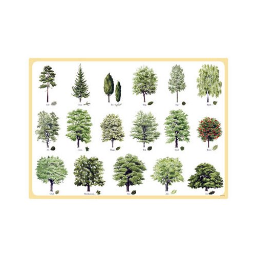 Placemat Swedish Trees